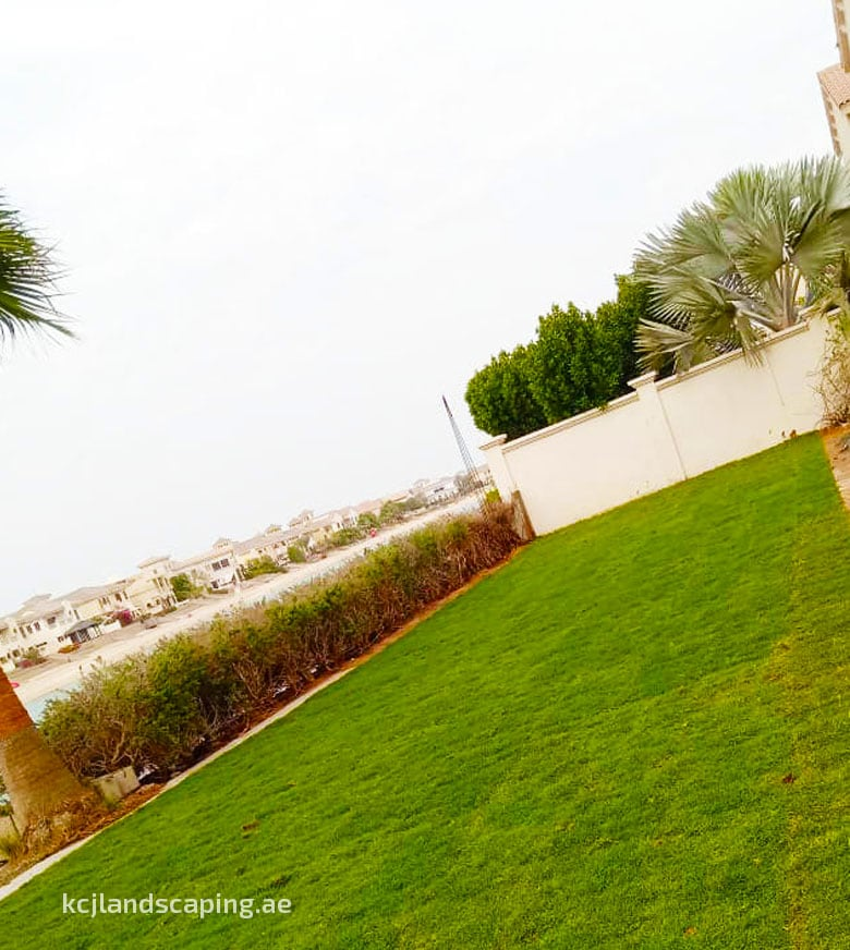 Natural Grass Landscaping In Dubai